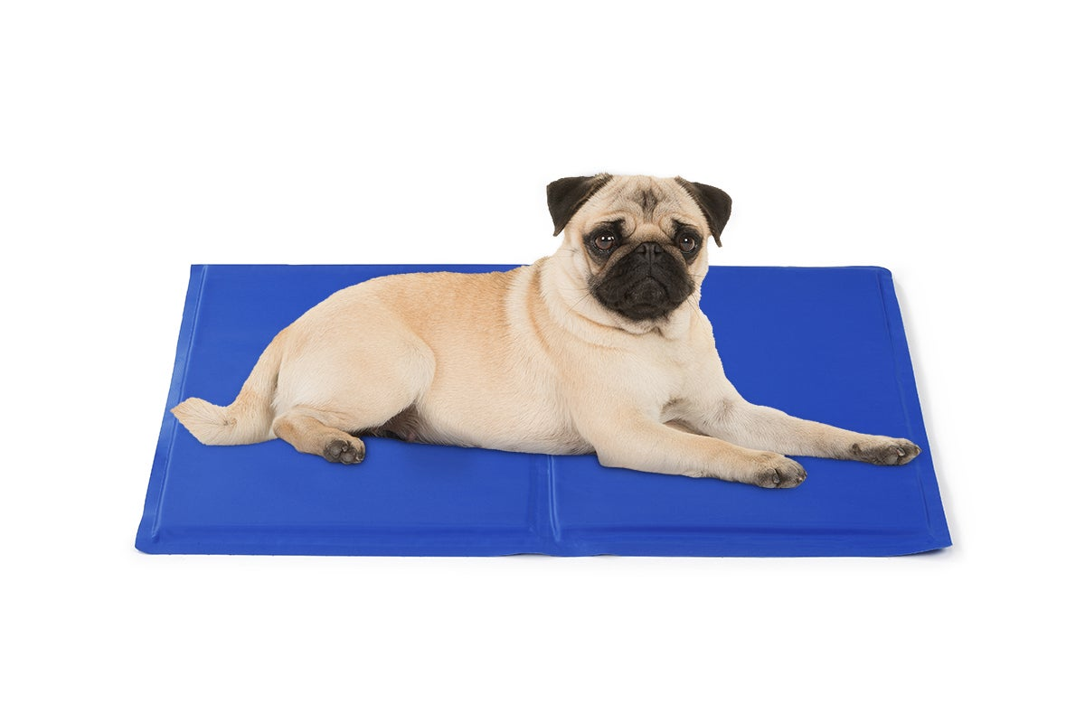 new pawever dog bed heavy duty waterproof large dog