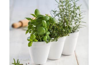 Maze Ivy Herb Planter (White)