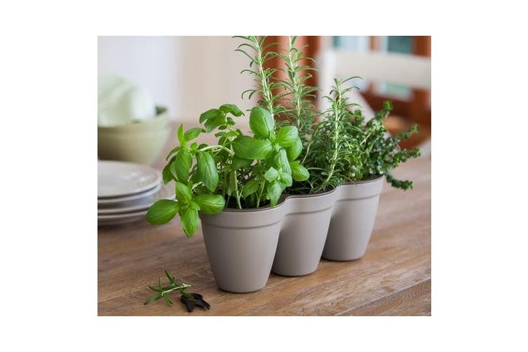 Maze Ivy Herb Planter (Grey)