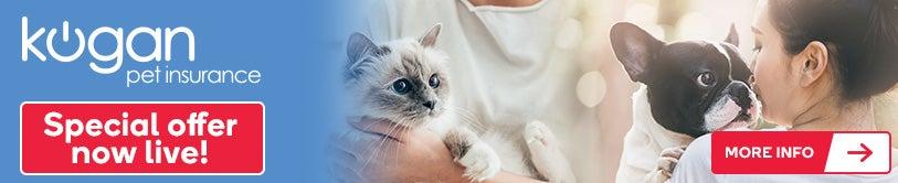Pet Insurance Banner