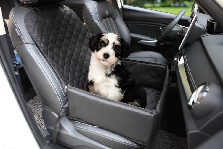 Pawever Pets Pet Booster 2-in-1 Waterproof Car Seat Cover