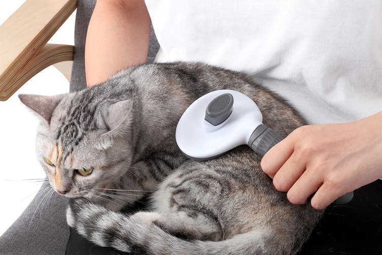 Pawever Pets Self-Cleaning Slicker Grooming Brush
