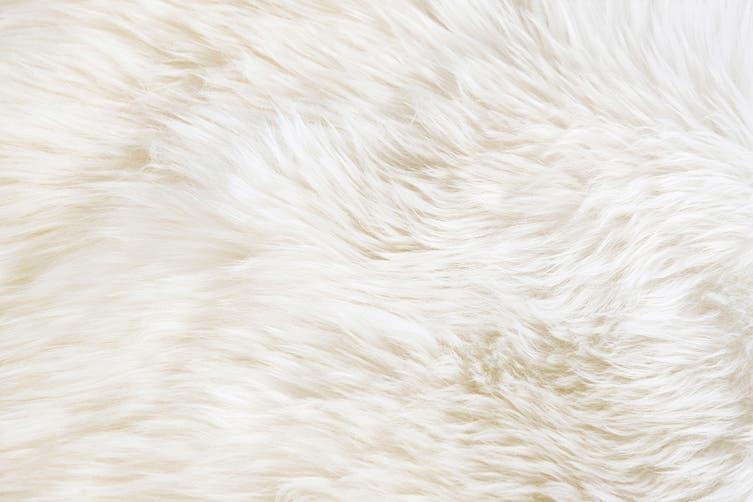 Shangri-La 100% Australian Sheepskin Rug