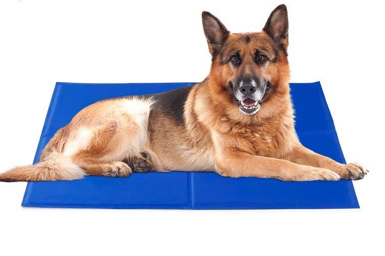 Pawever Pets Cooling Mat (Large)