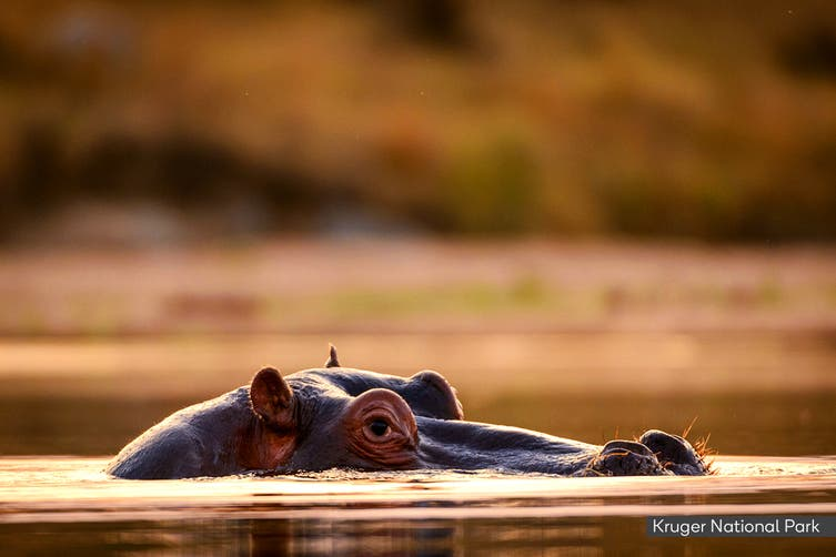 SOUTH AFRICA: 15 Day Sensational South Africa Tour Including Flights for Two