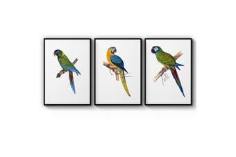 Set of Exotic Bird Wall Art