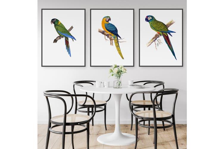 Set of Exotic Bird Drawings Australian Wall Art