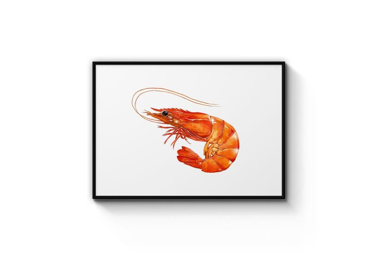 Shrimp Painting Wall Art