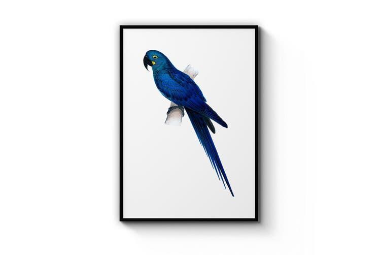 Hyacinth Macaw Blue Exotic Bird Drawing Wall Art