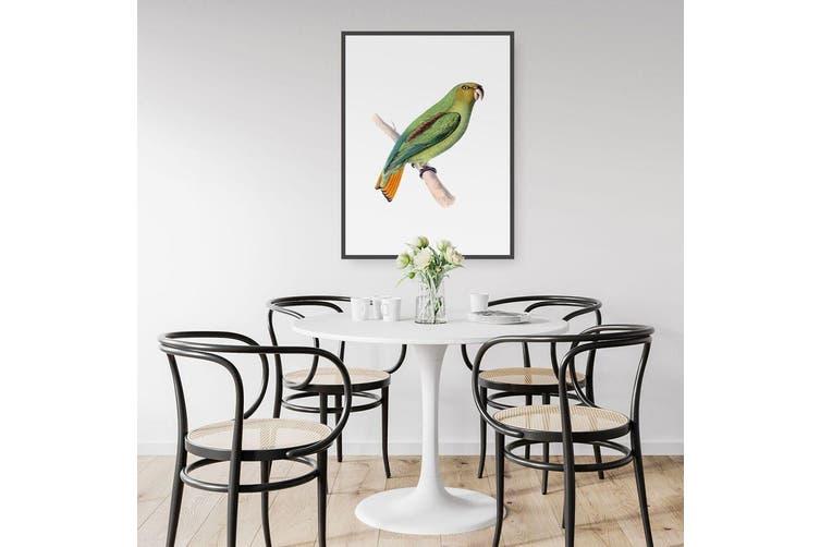 Golden-Tailed Parrot Bird Wall Art