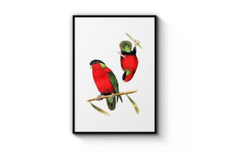 Collared Lories Bird Wall Art
