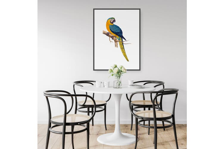 Blue and Yellow Macaw Wall Art