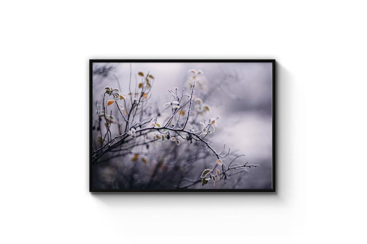 Winter Plant Nature Photograph Wall Art