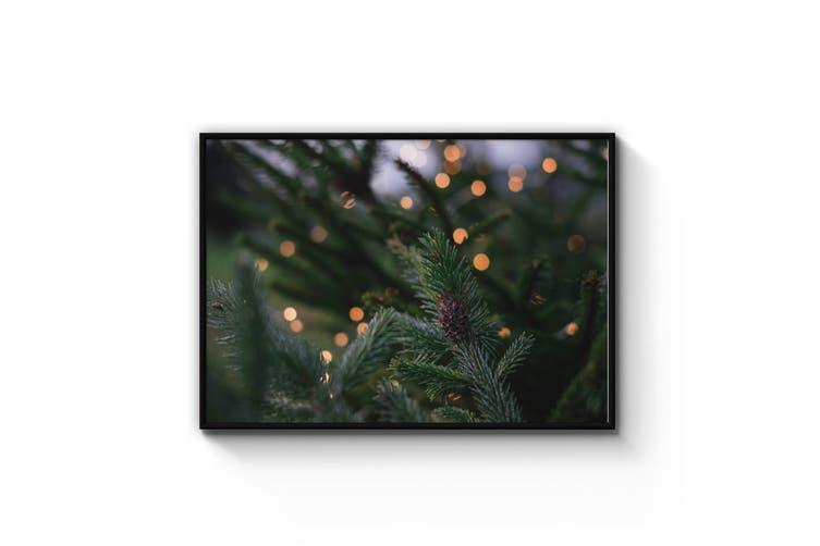 Winter Green Nature Photograph Wall Art