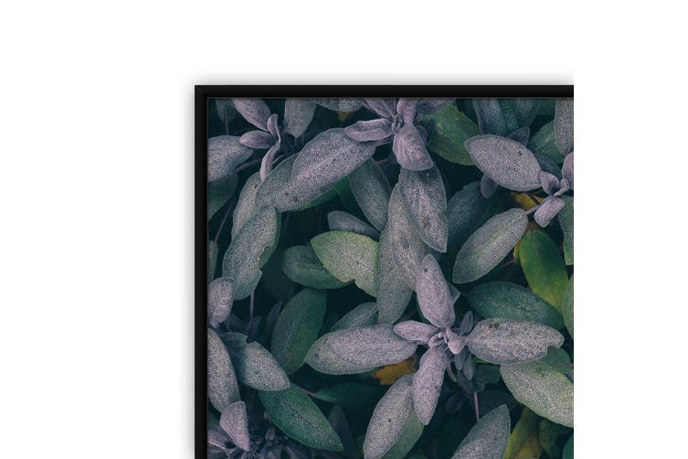 Purple Leaves Nature Photography Wall Art