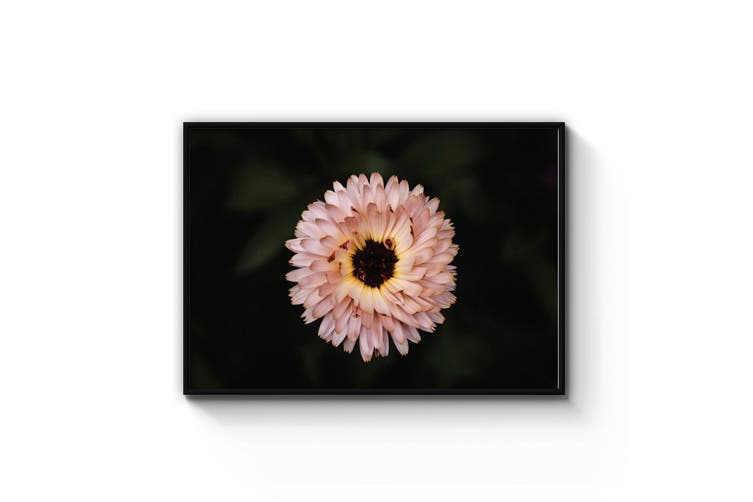 Pink Flower Close Up Photograph Wall Art