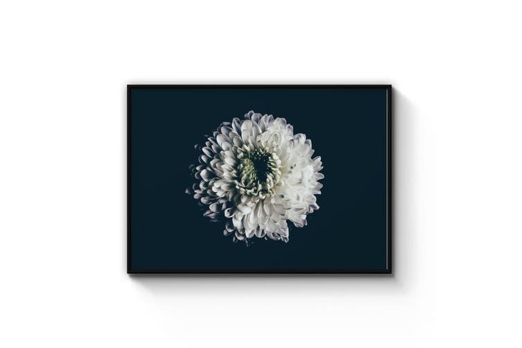 Single White Dahlia Flower Photograph Wall Art