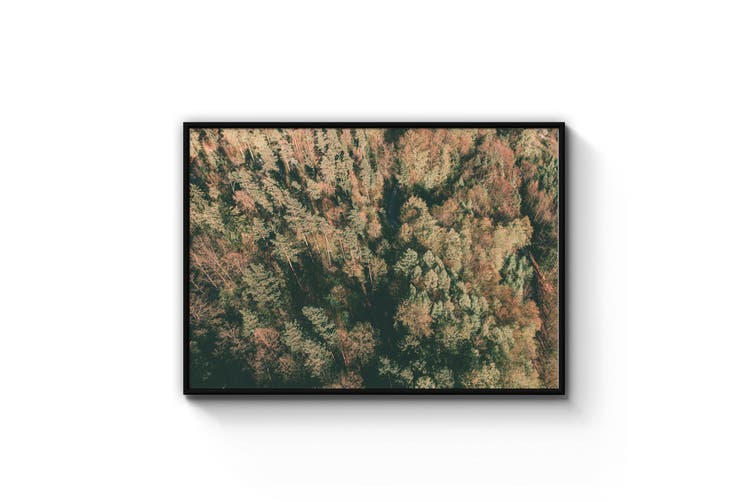 Morning Forest Landscape Photograph Wall Art