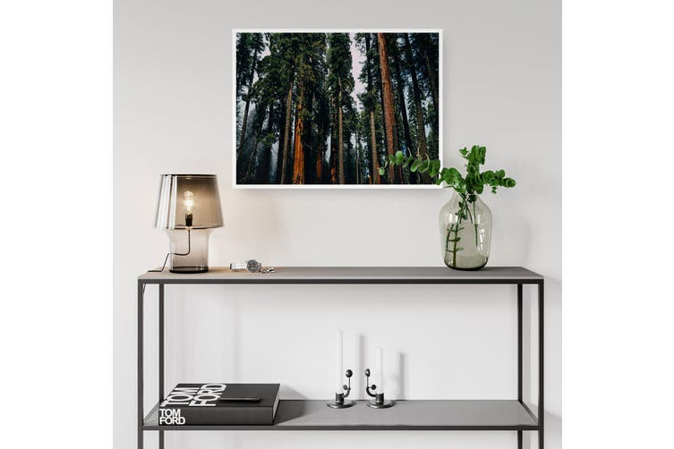 Redwood Forest Nature Photography Wall Art