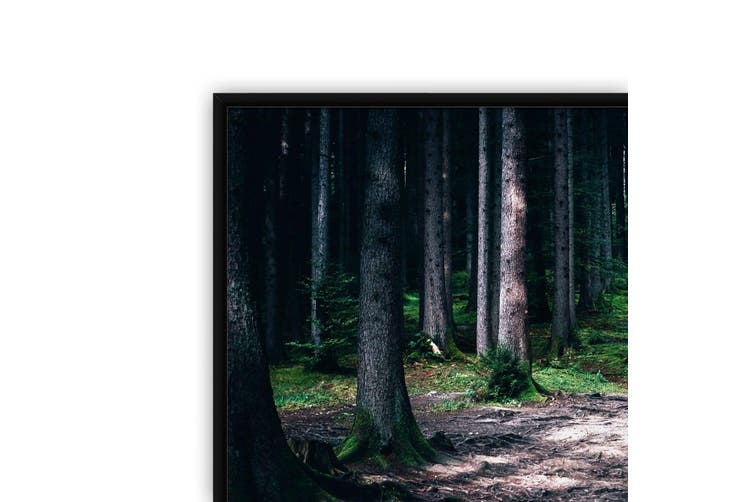 Wooded Walk Wall Landscape Photograph Art