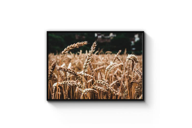 Wheat Field Photograph Farm Wall Art