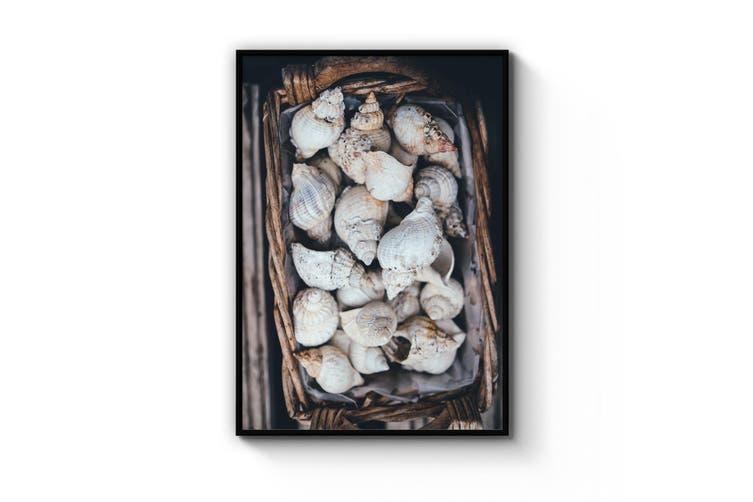 Shell Collection Coastal Photograph Wall Art