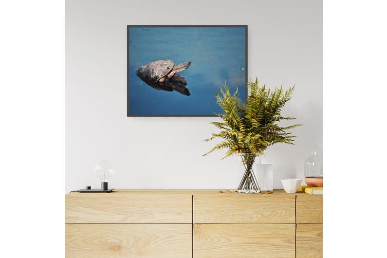 Sea Turtle Photograph Sealife Nature Wall Art