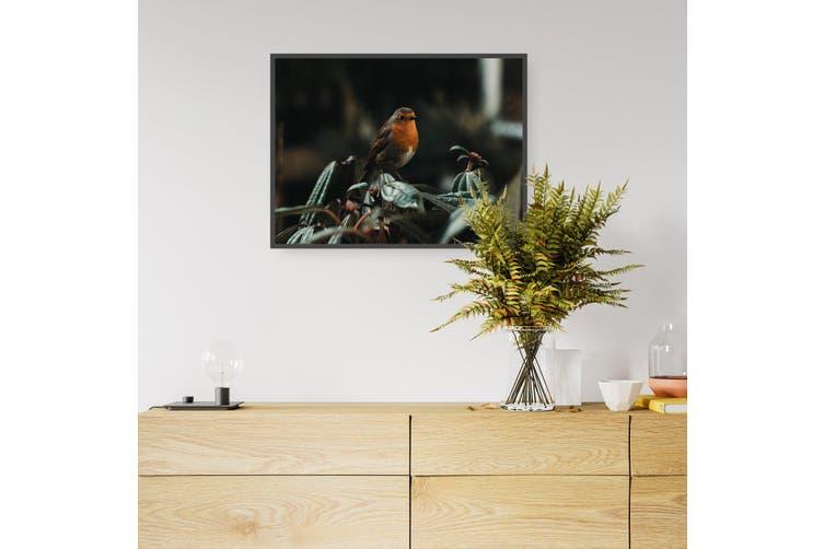 Robin Red Breast Bird Photograph Wall Art