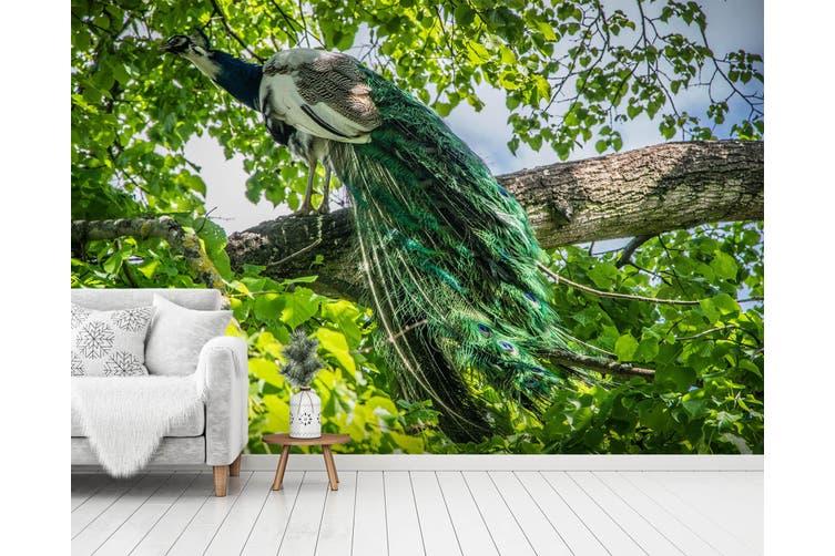 3d Home Wallpaper Forest Peacock 412 Bchw Wall Murals Wallpaper Murals Self Adhesive Vinyl Xxxxl 520cm X 290cm Wxh 205 X114 Matt Blatt