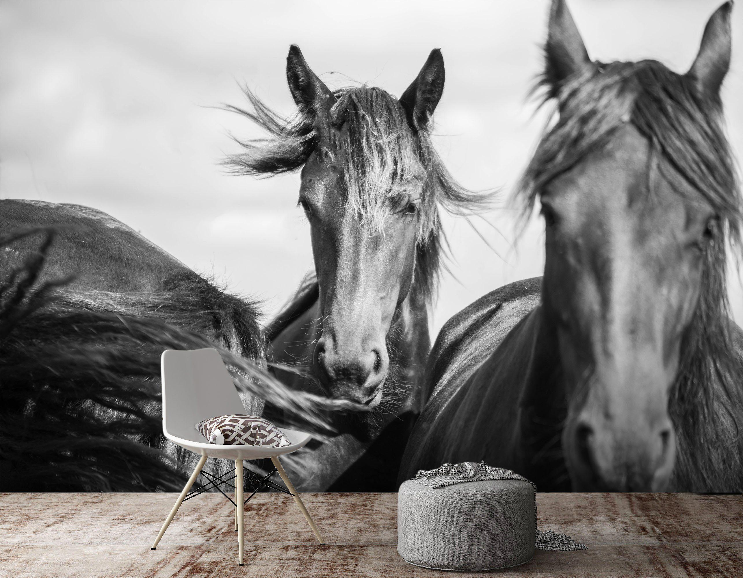 3d Home Wallpaper Black And White Grey Horse 671 Self Adhesive Vinyl Xxxl 416cm X 254cm Wxh 164 X100 Matt Blatt