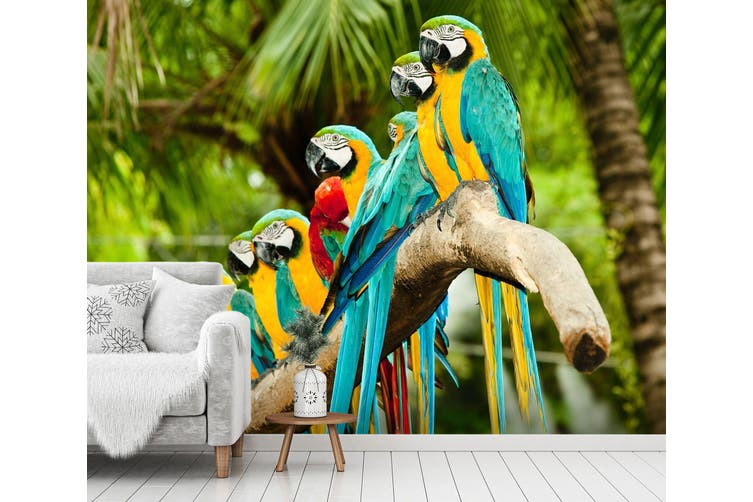 28+ Parrot Wall Paper Background