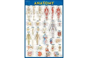 Anatomy - Laminated Poster (24 X 36) - A Quickstudy Reference Tool