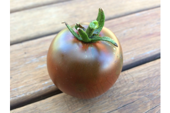 TOMATO Black Russian - Standard packet (see description for seed quantity)