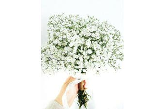 BABY'S BREATH gypsophila 'White' / Covent Garden - Standard Packet (see description for seed quantity)
