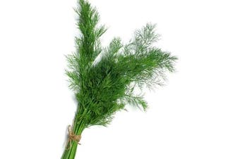 Dill 'Mammoth' - Standard Packet (see description for seed quantity)