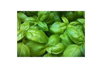 BASIL 'Sweet Genovase' - Standard Packet (see description for seed quantity)