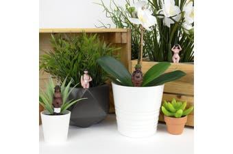 Plant Pot Naked Ramblers