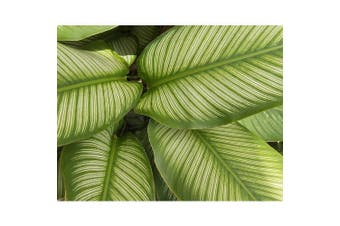 Canvas Print - Frond Zoom - 90x70