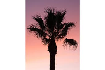 Canvas Print - Dusty Palm Sunset Solo - 70x90