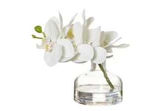 Rogue Phalaenopsis Glass Vase 19x15x19cm White