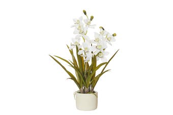 Rogue Cymbid Orchid 50cm x 50cm x 69cm Stone Pot