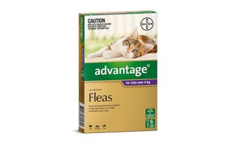 Advantage Flea Treatment for Cats over 4kg Pack of 6