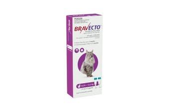 Bravecto Spot On Large Cat Purple 6.25 - 12.5kg 2 Pack