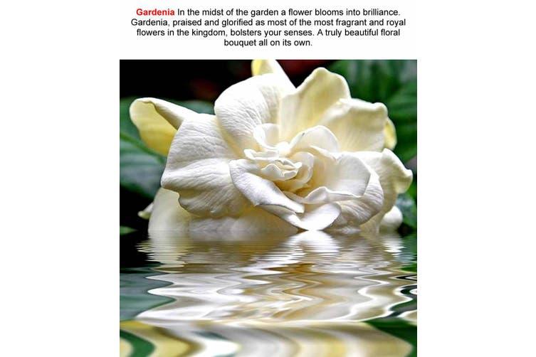 GARDENIA Diffuser Fragrance Oil Refill BONUS Free Reeds