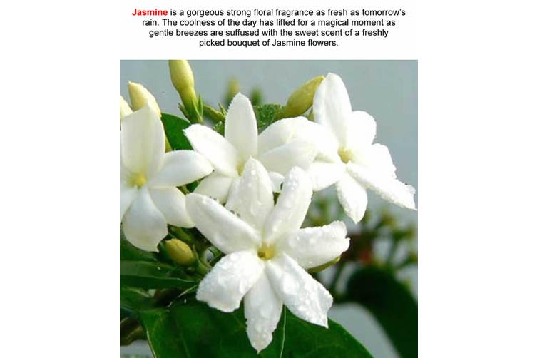 JASMINE Diffuser Fragrance Oil Refill BONUS Free Reeds