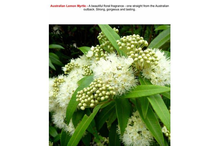 AUSTRALIAN LEMON MYRTLE Diffuser Fragrance Oil Refill BONUS Free Reeds