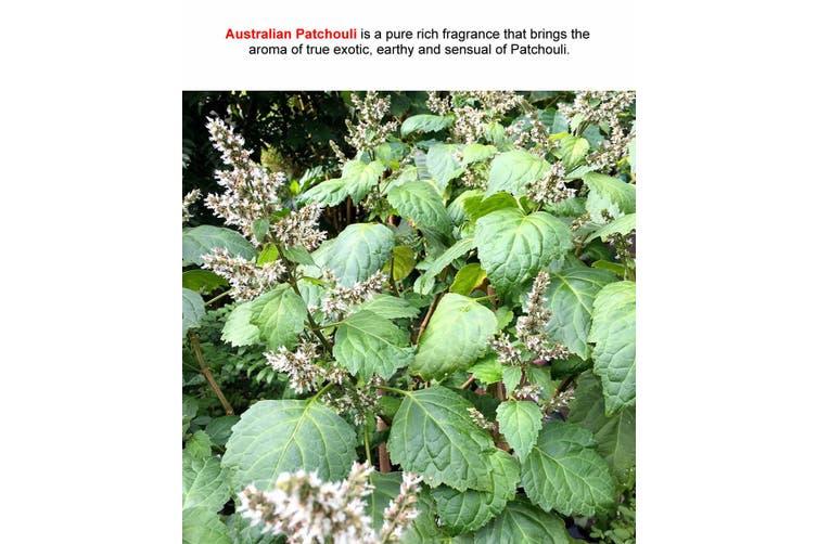 AUSTRALIAN PATCHOULI Diffuser Fragrance Oil Refill BONUS Free Reeds