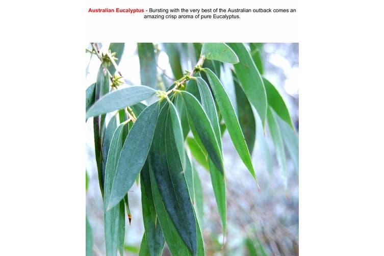 AUSTRALIAN EUCALYPTUS Diffuser Fragrance Oil Refill BONUS Free Reeds