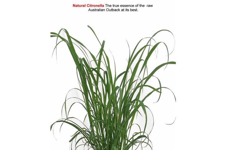NATURAL CITRONELLA Diffuser Fragrance Oil Refill BONUS Free Reeds