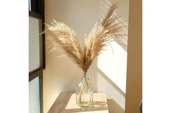 Pampas Grass Simple Home Decor